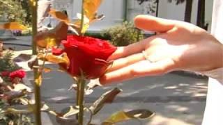 Видеооператор и фотограф на свадьбу в Киеве 0675089397.wmv(, 2010-02-17T20:20:35.000Z)
