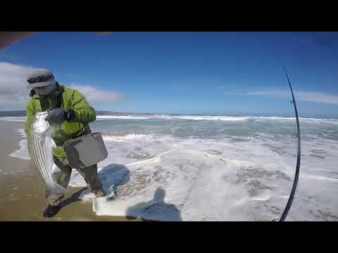 Fly Fishing Surf Stripers