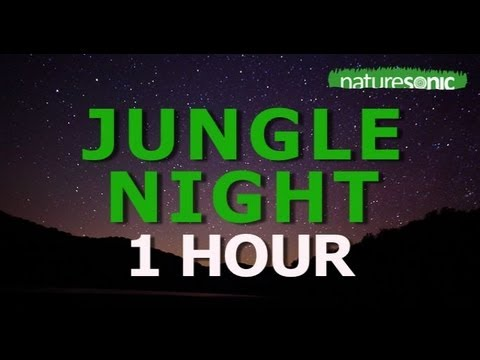 REAL JUNGLE NIGHT SOUND AMBIENCE FOR RELAXATION - SEMUC CHAMPEY, GUATEMALA