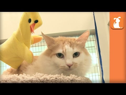 Kitties DO NOT want to be friends with this Ducky! - Kitten Love