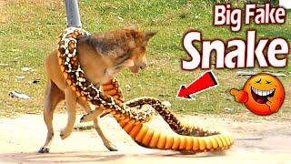 Big Fake Snake vs Prank Dog Sleeping So Funny - New Video Prank Dog 2021 Try To Stop Laugh