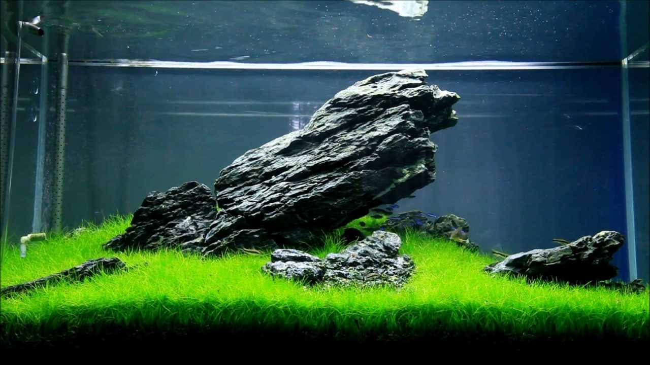 Just Aquascaping Iwagumi Youtube