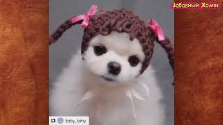 Подборка смешных котов и собак Это видео поднимет настроение на весь день