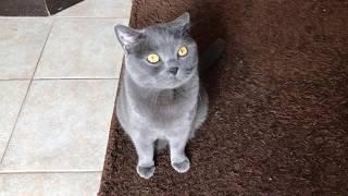 Том кот строит глазки хороший котик