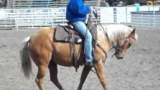 Old West Curly Horses Nevaeh Lil Step FOR SALE video 2   YouTube
