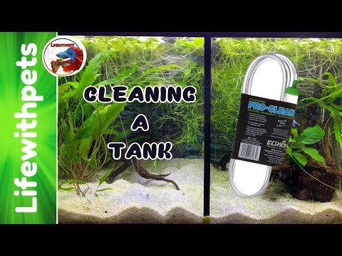 CLEANING A BETTA  FISH TANK