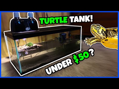 CHEAPEST WAY To Set Up A TURTLE TANK!