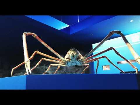 深海生物の聖地、沼津市戸田の「駿河湾深海生物館」、リニューアルオープンイベントを開催!