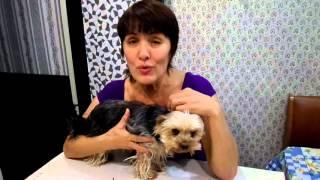 Видео отзыв о стрижке собак