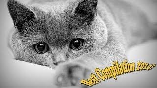 Смешные Коты.