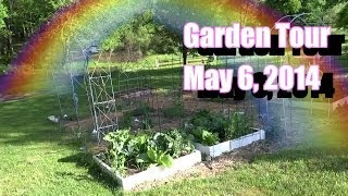 Garden Tour May 6 Flea Beetle Infestation, Garlic Scapes, Broccoli Tips, More