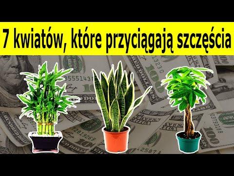 7 kwiatów które