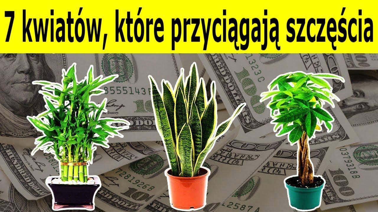 7 Kwiatow Ktore Przyciagaja Do Domu Szczescie I Bogactwo Wiem Youtube