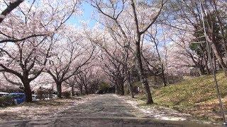 堀坂峠~侍谷林道 春のオープンドライブ