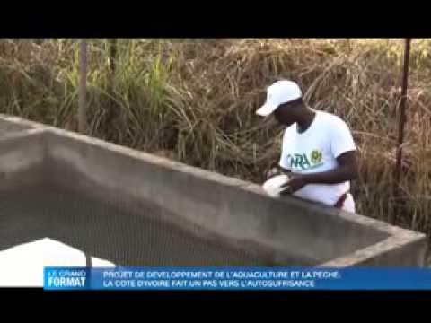 Grand Format: Pisciculture, la Côte d'Ivoire fait un pas vers l'autosuffisance