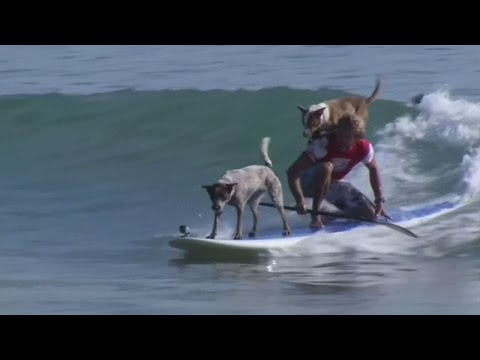 Surfing champion rides the waves with his dogs