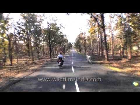 Travelling Jabalpur to Kanha by road