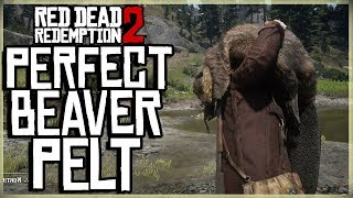 HOW TO GET A PERFECT BEAVER PELT - RED DEAD REDEMPTION 2 PRISTINE BEAVER HUNT