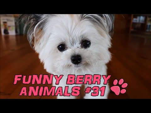 Cute cats, dogs (smart cats) Funny cats 2015 || Funny Berry Animals #31