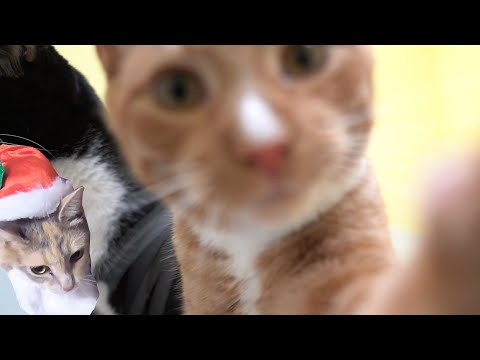 Cats Biting & Playing With Our Camera for 15 Minutes | Cat Angels Shelter Footage