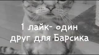 Люблю котёнок грустная Cinema читать💔💔💔💙💙💙💙💙😿😿😿😿😿