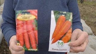 Сеем Раннюю Морковку 2016 . Пошаговая Инструкция .(Здравствуйте в этом видео я вам расскажу Как Посеять Раннюю Морковку. Попытаюсь это сделать максимально..., 2016-04-08T19:50:31.000Z)