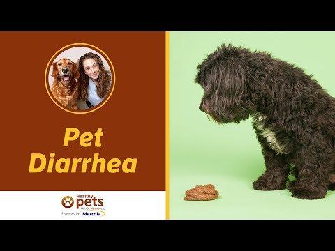 Dr. Becker Discusses Pet Diarrhea