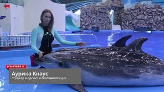 Дельфины Приморского океанариума поздравили читателей ИА PrimaMedia с Новым годом