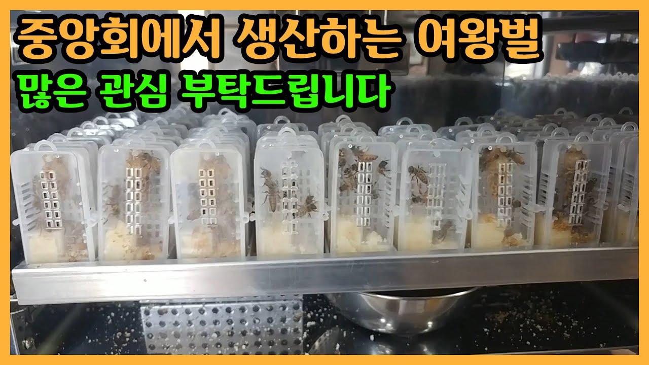 [제품홍보] 중앙회에서 생산하는 여왕벌 많은 관심 부탁드립니다