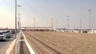 Camel race in Qatar
