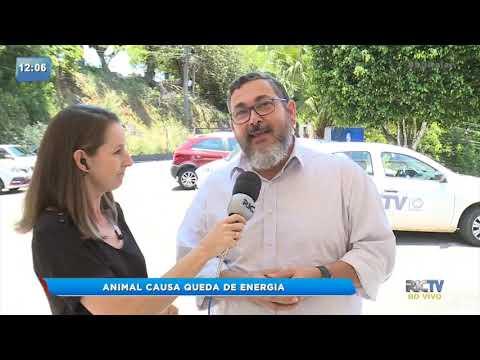 Animal causa queda de energia em Itajaí Balneário Camboriú e Camboriú