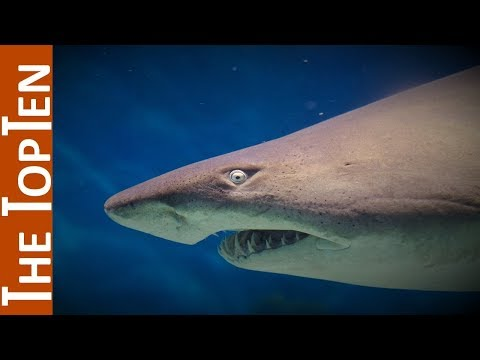 The Top Ten Largest Sharks In The World - YouTube