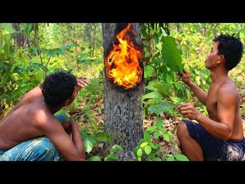 Fire Burn Inside Hollow Tree To Get Resin Tree (Oil)