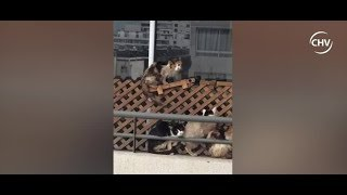 Captan a varios gatos en completo abandono en departamento de Santiago - CHV Noticias