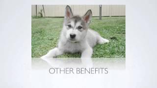 [puppy Training Tips] How Do I Register A Dog?