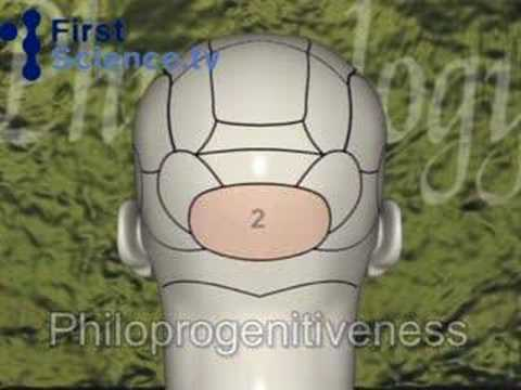 Phrenology - studying the shape of the head