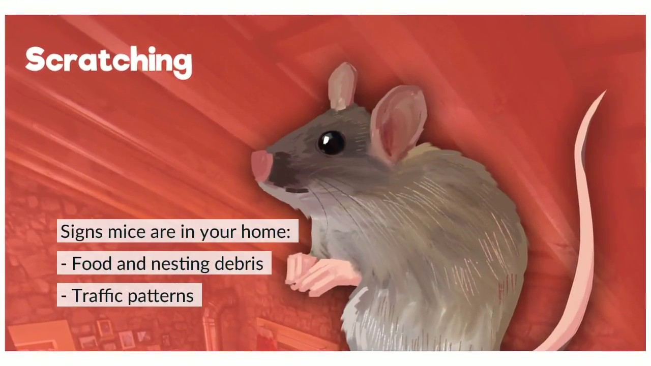 Find Out Which Critters Cause Noises in the Attic