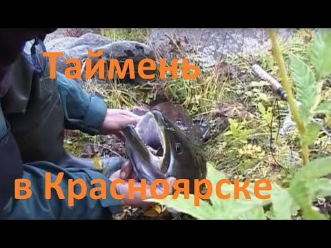 Диалоги о рыбалке - 201- Ловля тайменя в Красноярске.