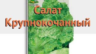 Салат обыкновенный Крупнокочанный (Кочанный 🌿 обзор: как сажать, семена салата