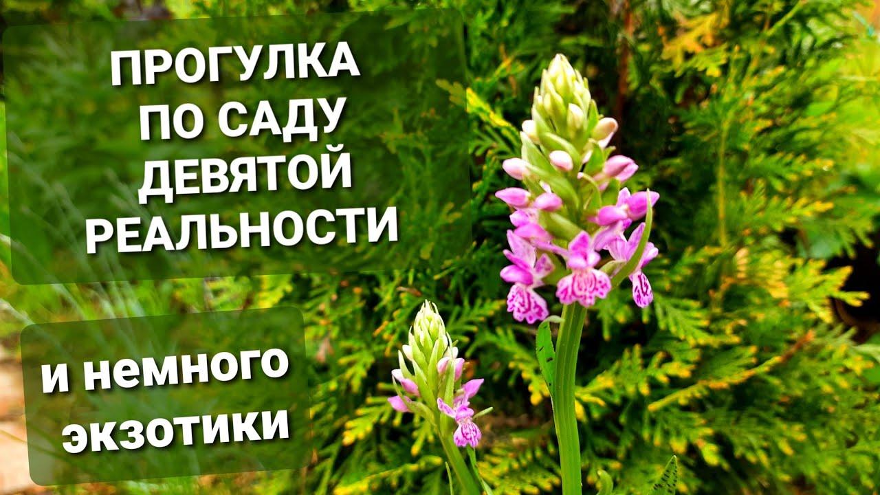 Сад Девятой реальности🌿Горноколосник🌿Седум такесимский Атлантис🌿Дикая орхидея🌿Хакуро Нишики и др.