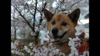 heal the world with the dog !! ☆彡☆彡.