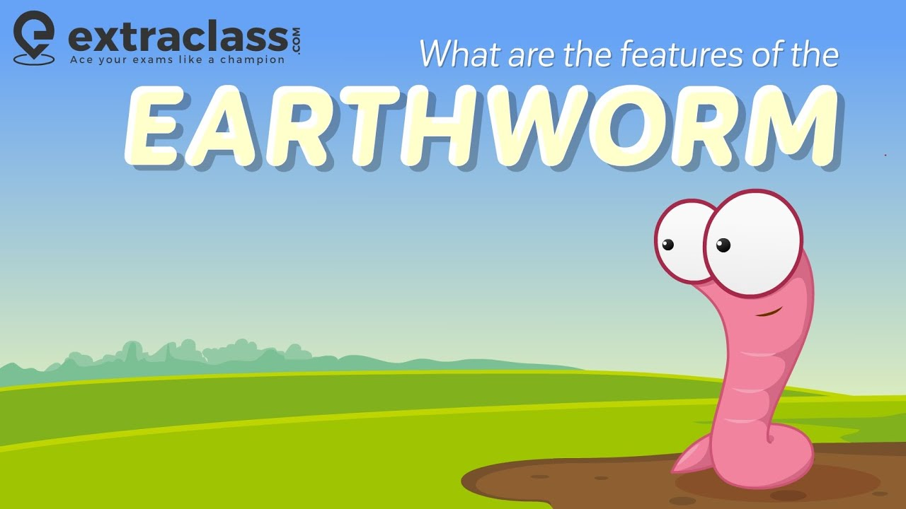 What are the features of the earthworm? | Biology | Extraclass.com