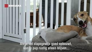 Hoe kan ik mijn hond zorgeloos alleen laten?