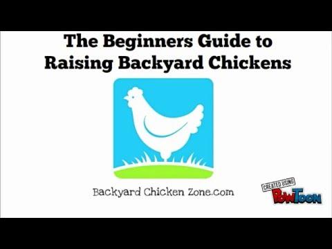 Raising Backyard Chickens   Beginners Guide To Raising Backyard Chickens