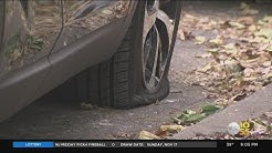 32 Vehicles Vandalized In Bay Ridge, Brooklyn