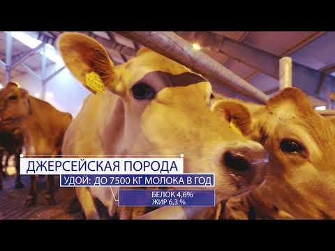 """Фильм о компании """"Молвест"""""""