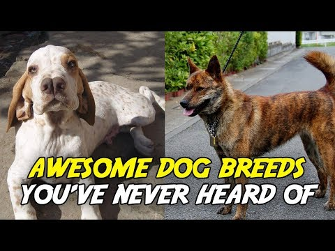 Awesome Dog Breeds You've Never Heard or Seen Before