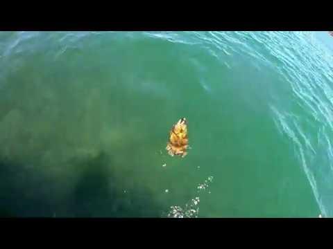 Flathead Fishing Tasmania : Fishing Hobart