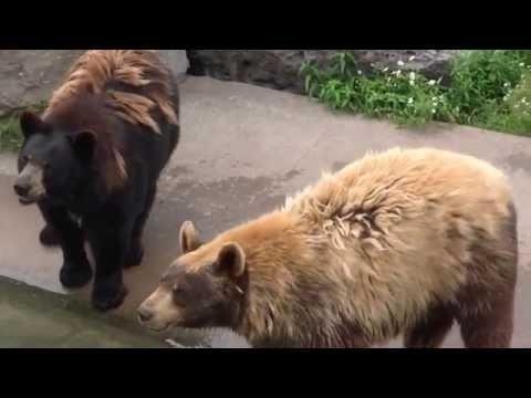Marineland Bears Canada ontario