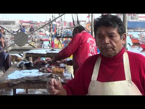 Fish selling & buying at Caleta, Iquique, Chile